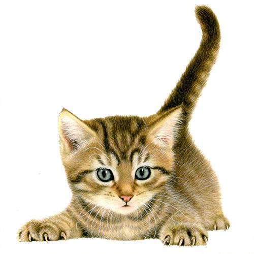 Kittens Wallet Greeting Cards-301