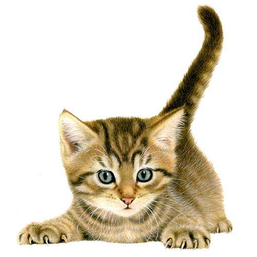 Kittens wallet wenskaarten-301