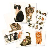Franciens Katten Set van 7 wenskaarten
