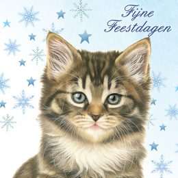 Franciens Katten kerstboxje BOSKITTENS MET DENNETAK EN STERREN
